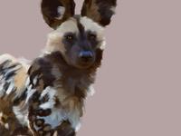 African Wild Dog 🐕🐆