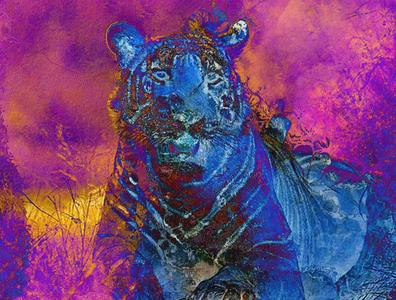 Tigre bleu sur fond mauve