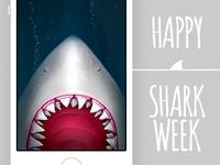 Ascha walls - Shark week update!