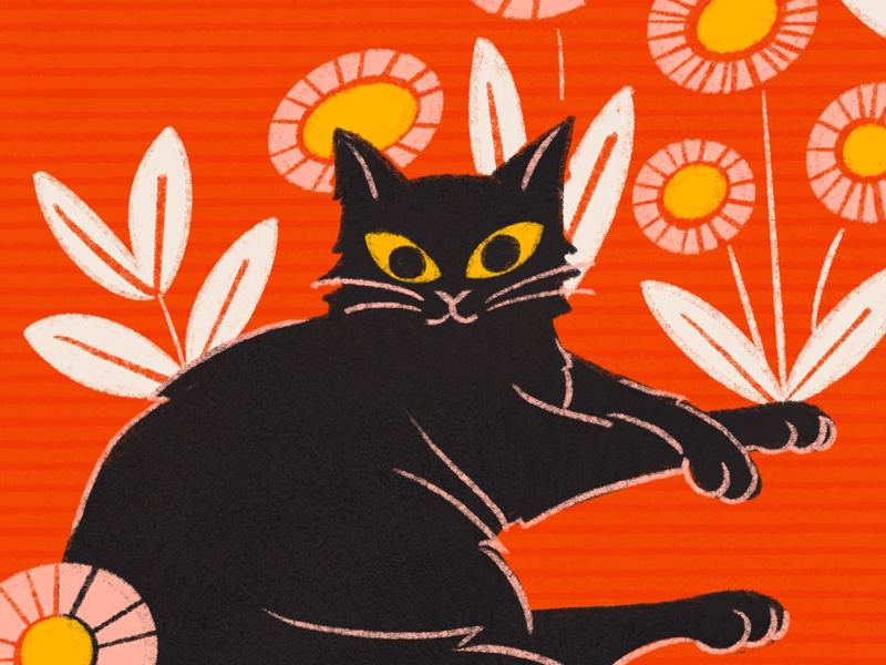 Black Cat cat floral drawing procreate illustration