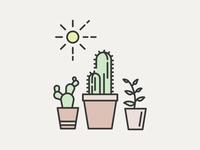 Succulents in the Sun