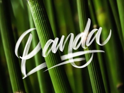 do you know panda ? procreate letter design lettering goodtype brand branding typography