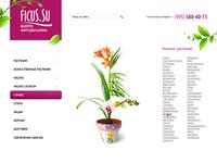House plants store Ficus