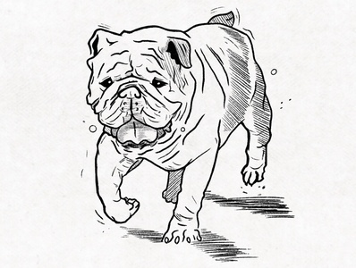 Newton bulldog