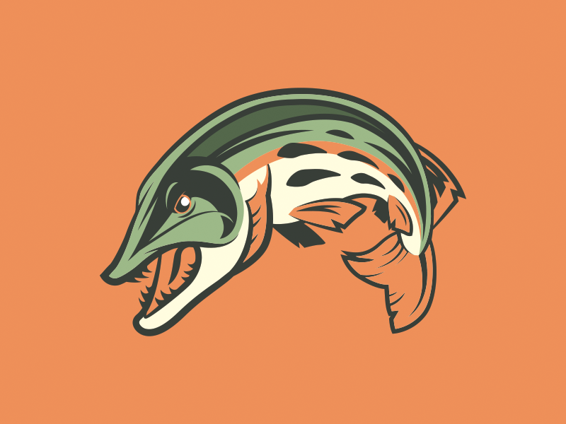 Muskie Mascot arched scales teeth angry mean leaping jumping fish pike northern mascot musky muskie