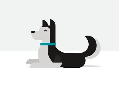 Husky Animation siberian husky pup design illustration after effects ae animation dog husky