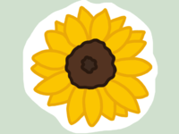 Sunflower (23/100 days)