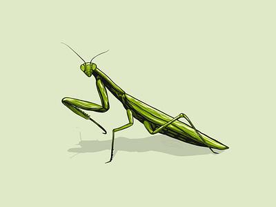 Mantis dribbble animal green mantis insect illustration