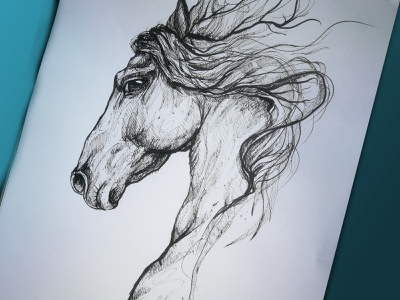 Nobility and pride of the Horse handdrawing ink black illsutration pride horse drawing creative criniere