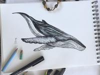 Ma baleine bleue