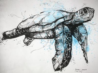 Caretta Turtle animal sketch illustration splatters pencil drawing caretta turtle