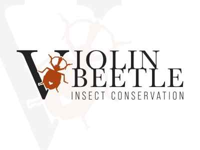 Violin Beetle Branding Concept branding brand identity vector conservation insect bug beetle logotype logo