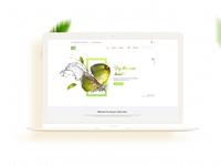 Cococool Website