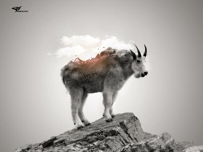 Mountain on Mountain Goat