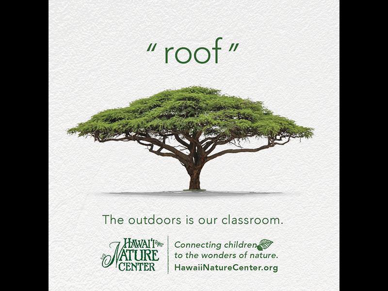 roof public service bradley shin wonder future kids wasiswas facebook outdoors classroom nature tree roof hawaii nature center