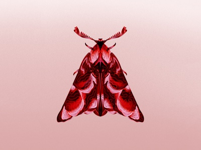 Moth illustration insects pink red photoshop butterfly nature illustrator gradient moth insect