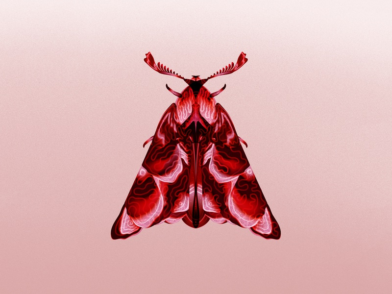 Moth illustration