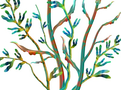 Branching out colourful leaf plant nature branches tree