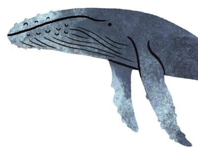 Humpback Whale icon illustration marine life animal kingdom animals nature science whale