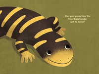 All About Salamanders