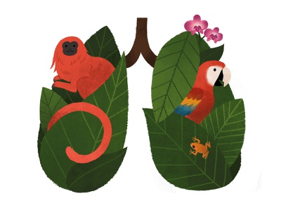 Amazon Lungs plants animals nature goldenliontamarin icon rainforest amazonrainforest kidlitforclimate brazil treefrog orchid climatechange macaw govegan ecofriendly environment lungsoftheearth illustration actforamazonia amazon