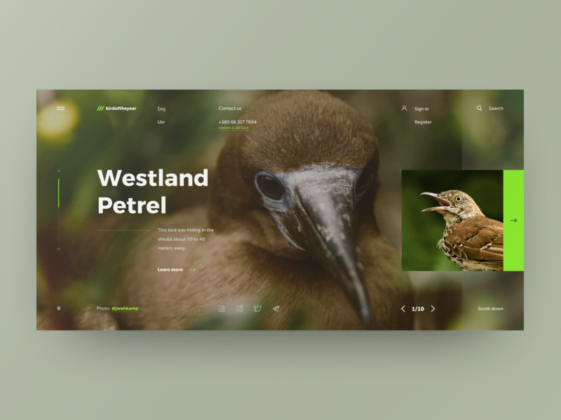 Westland Petrel layout bird web site grid site web design design ux ui