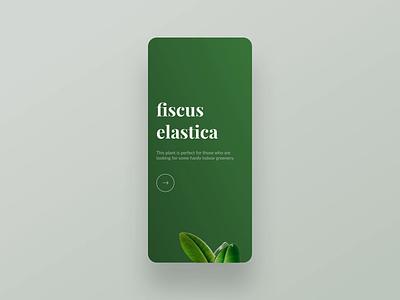 Daily UI 001 – Plant app sign up principle figma plant minimalism minimal clean ui simple signup sign up onboarding daily ui 001 dailyui daily ui
