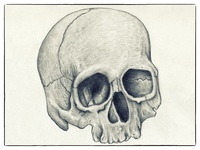 Skull Pencil drawin