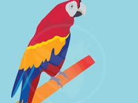 Vector Parrot Bird Illustration