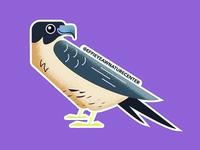 Wek' Wek the Peregrine Falcon