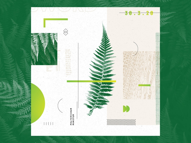 Polystichum Munitum texture type collage illustration vector design geometry layout