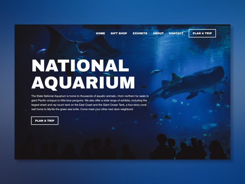 National Aquarium webdesign challenge ux ui design web nature sea aquarium photo affinity