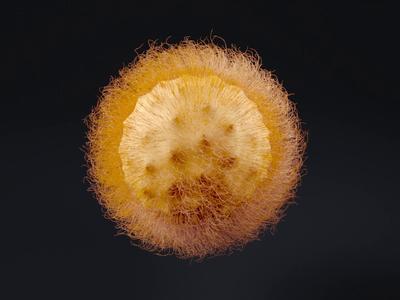 Freaking Hairy Ball corona video hair illustration design cinema 4d render animation 3d c4d