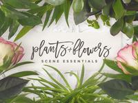 Scene Essentials - Plants & Flowers