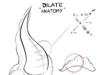 Dilate - Anatomy