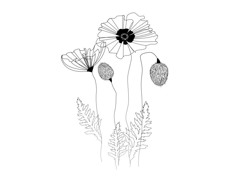Poppies By Nathalie Heisner On Dribbble