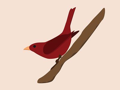 Red Birdie red bird illustration vector