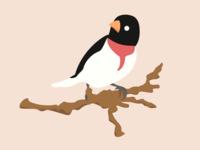 Rose-Breasted Birdie