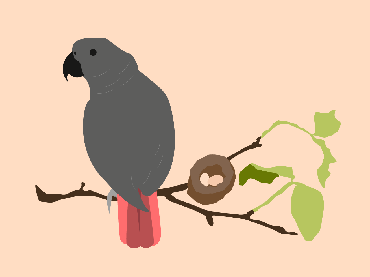 Parrot on a Branch grey congo african branch leaves leaf illustrator parrot minimalistic egg birb vector illustration bird