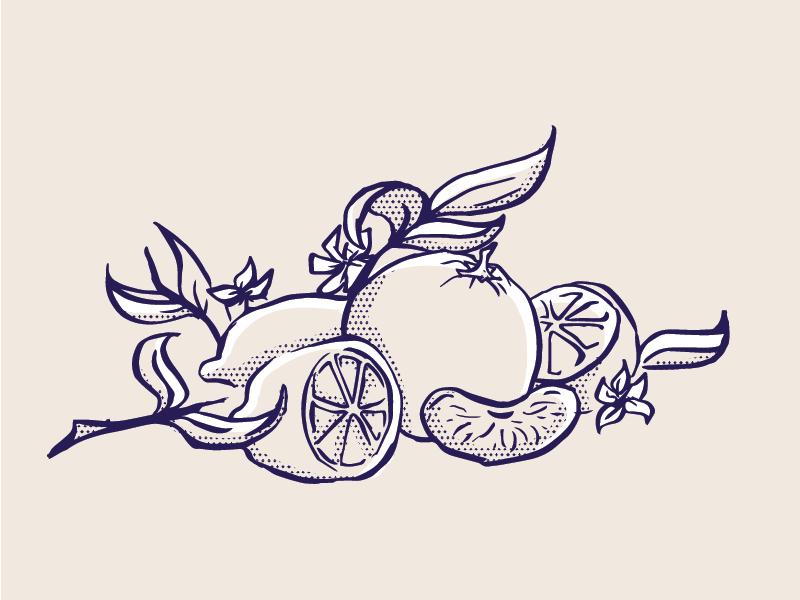 Fruity illo quick sketch neutral beige halftone citruses oranges orange illustration sketch