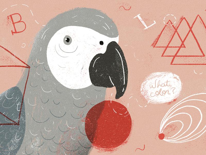 Alex the parrot smart animals alex parrot parrots illustration