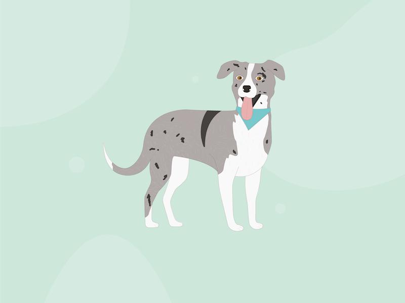 Dog illustration doggo puppy illustration dog