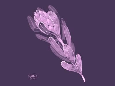 Purple Protea