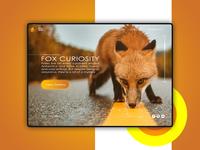 Curiosity Fox