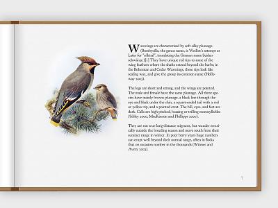 Inside Page of a Concept B illustration typography web design website design