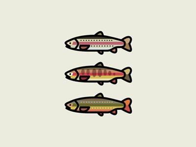 Trout - Reel & Cast outdoors flyfishing intheriver brook golden rainbow fish trout fromthefieldnotes overlays colors shapes