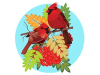Bird Red Cardinal
