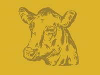 Cow // 01