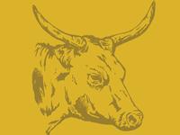 Cow // 02
