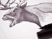 Raven X Deer